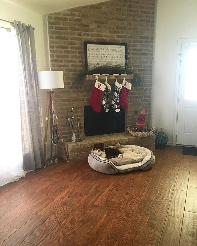 The stockings were hung by the chimney with cheer, in hopes that bones and squeaky toys soon would appear.  _____________________ Maverick was nestled all snug in his puppy bed, while visions of squirrels scampered in his head. • • • • #miniaussie #miniaussie_world #miniaustralianshepherd #australianshepherd #redtriaussie #aussie #milso #milspo #milsowife #militarywife #militaryspouse #armylife #armywife #armymilso #deployment #dogmom #dogstagram #pupstagram #monroeandmaverick #monroetales #writersofinstagram #pcs #thatsdarling #everysquareastory #mybeautifulmess #searchwandercollect #liveunscripted #thenightbeforechristmas #dogchristmas #militarylife