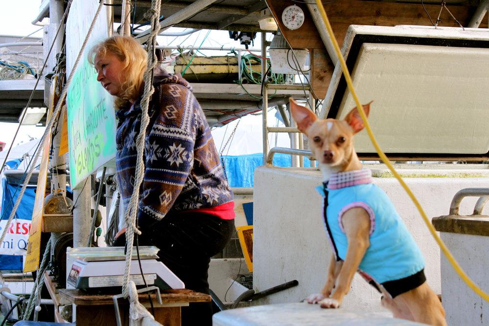 steveston-fishing-dog.JPG