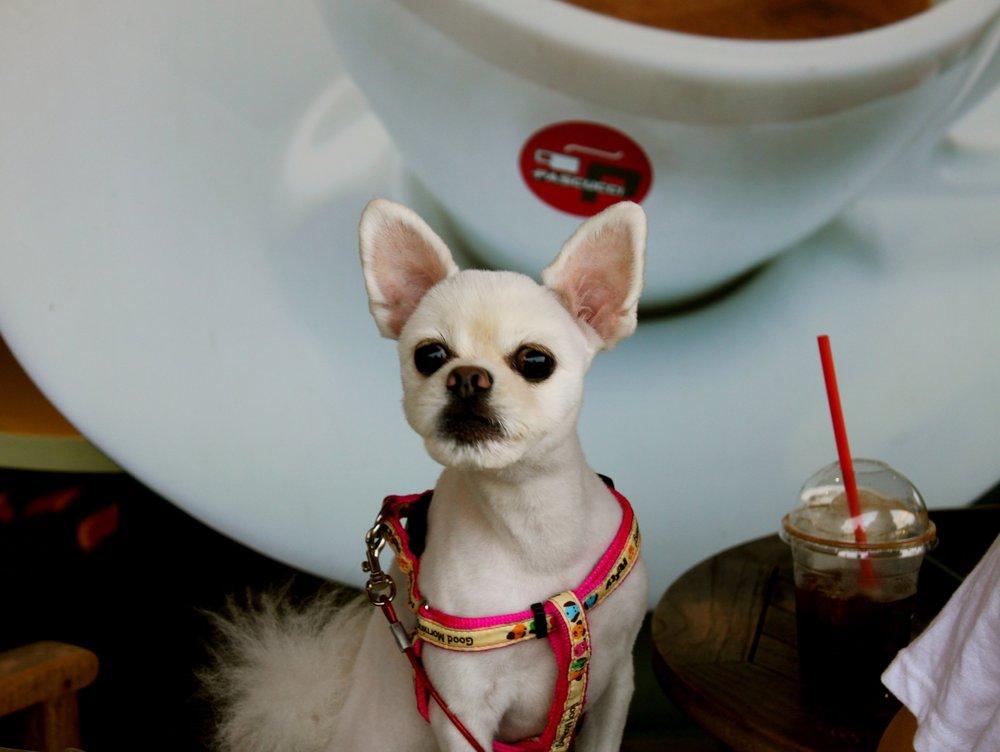 busan-puppy-cafe.JPG
