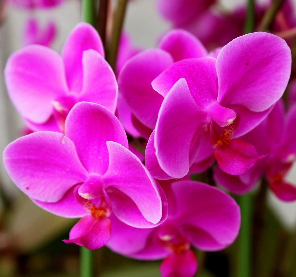 purple-floral-korea.JPG