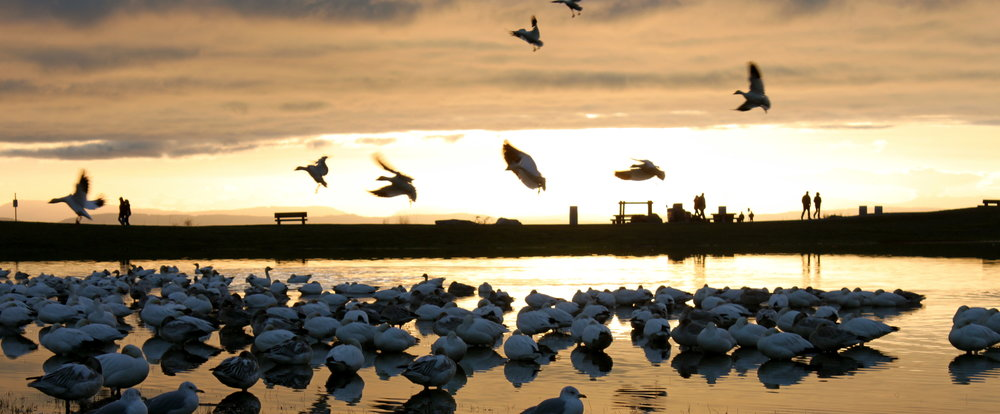 steveston-bc-sunset.JPG
