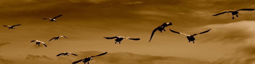 steveston-birds1.JPG