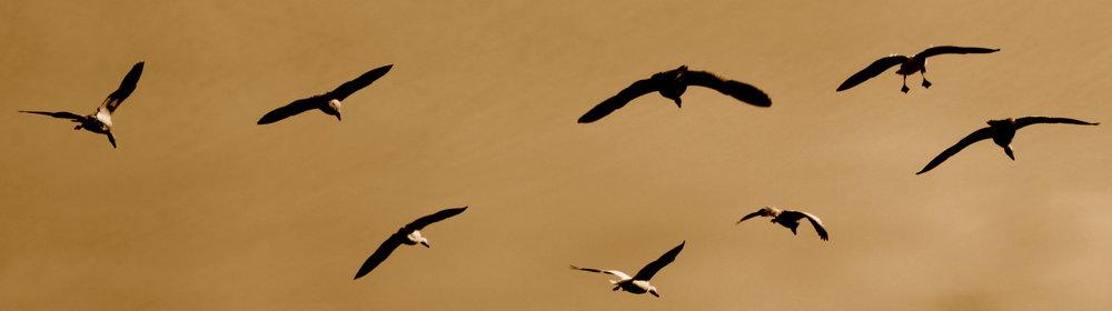 steveston-birds3.JPG