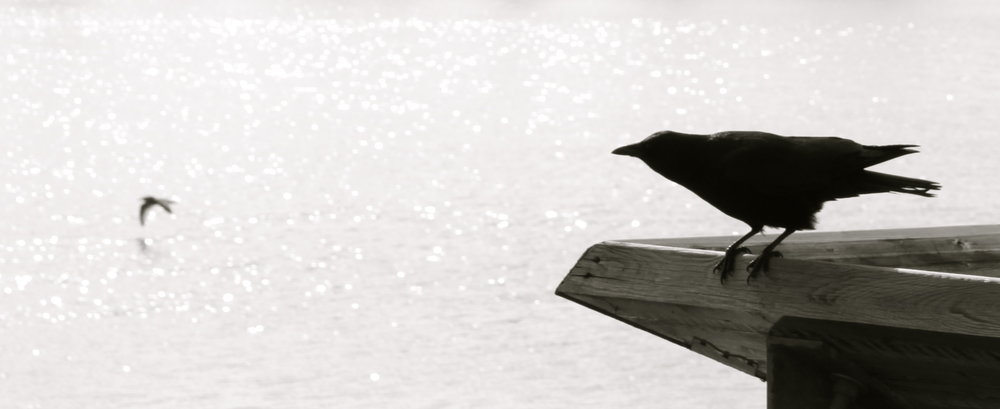 steveston-birds.JPG