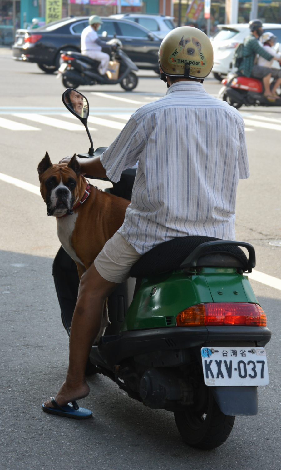 added-dog-scooter-kaohsiung.jpg