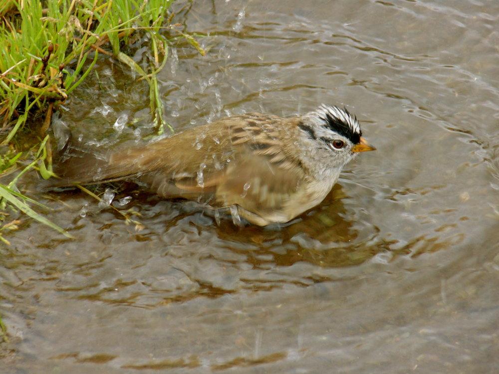 bird-bath1.JPG