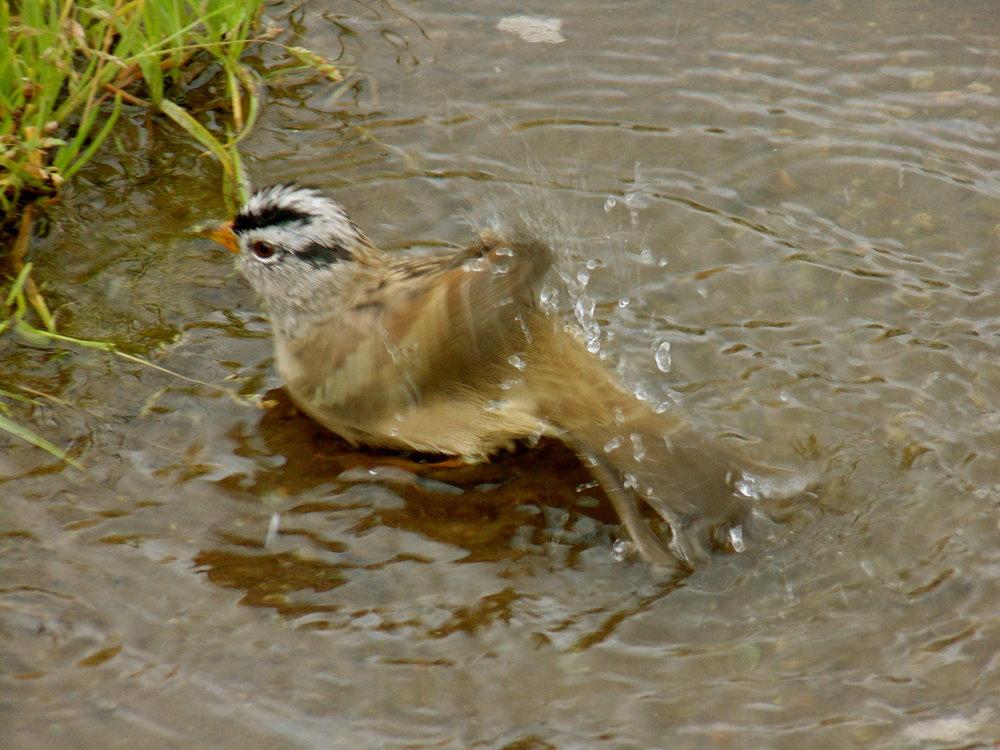 bird-bath2.JPG