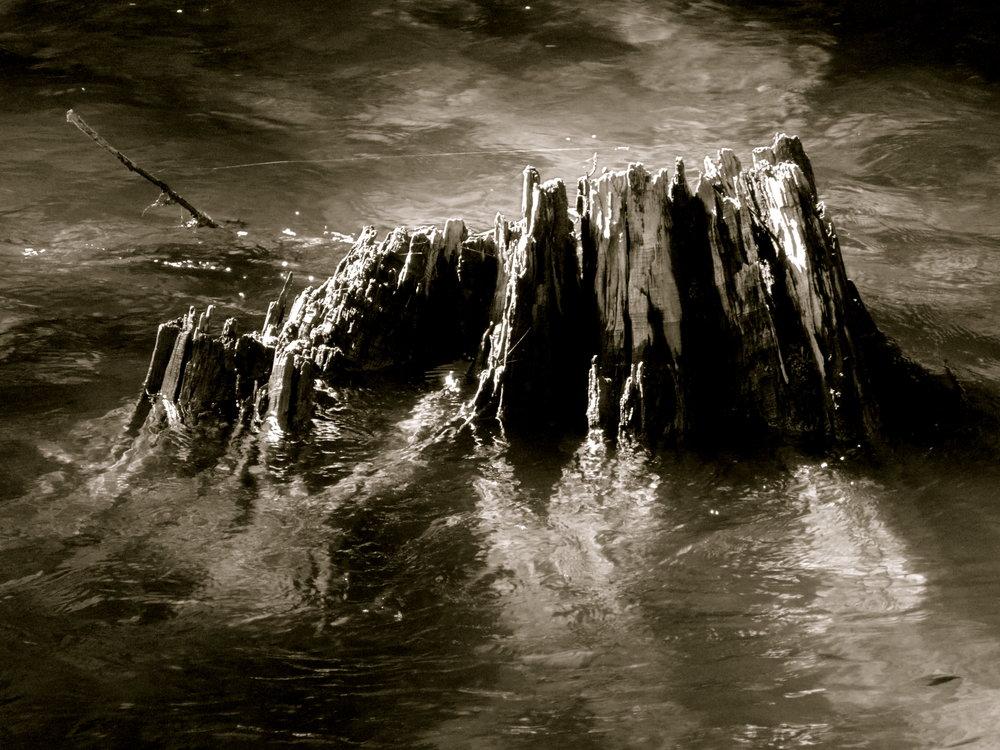 stump-in-whistler.JPG