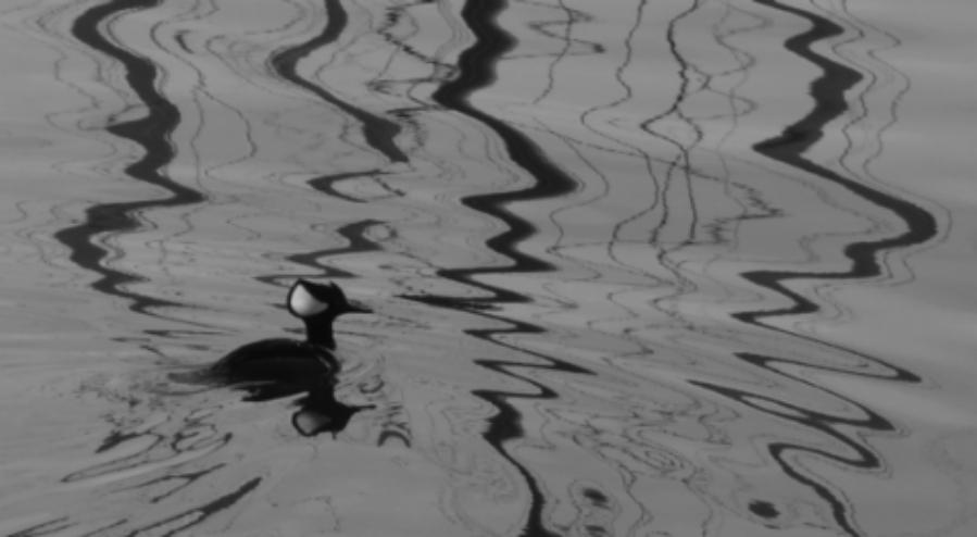 bird-reflections-victoriabc.jpg