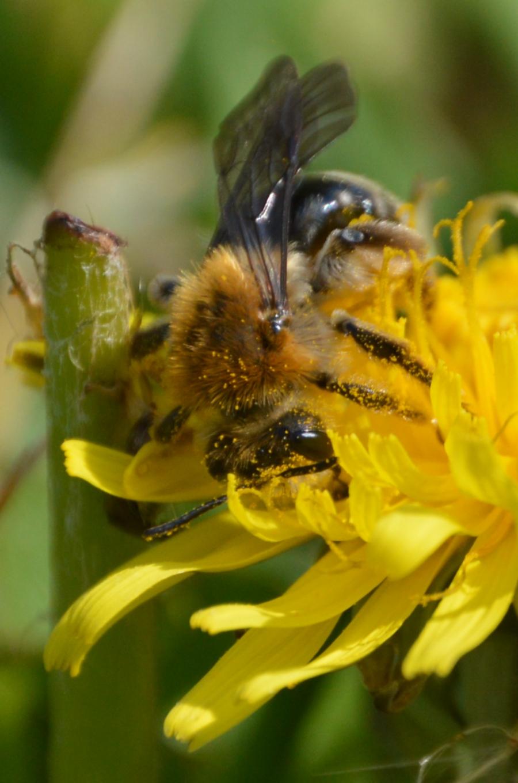 victoriabc-bee-pollen20.jpg