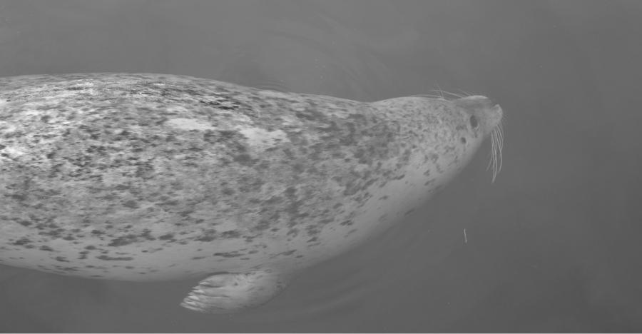 victoria-ocean-seals.jpg