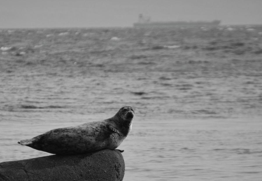 sookebc-seal-beach.jpg