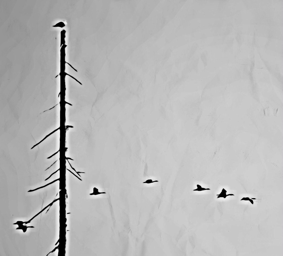 geese-vancouver-canada.jpg