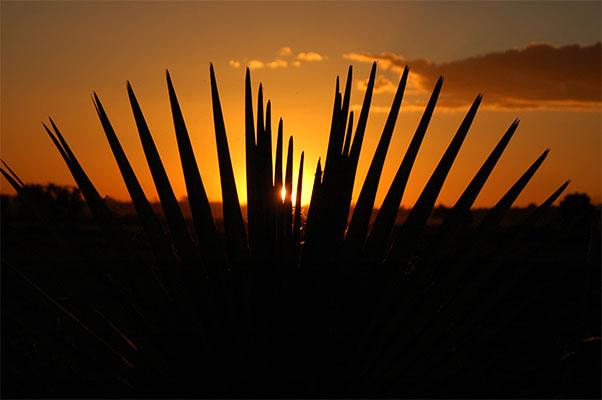 palm-sunset.jpg