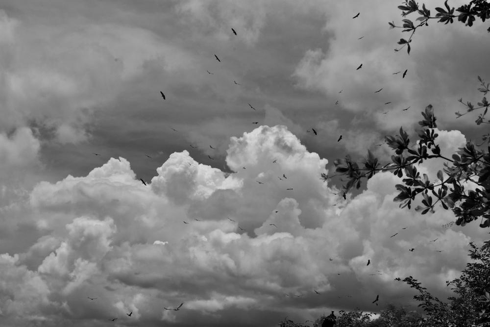 Vultures in the sky, Zimbabwe