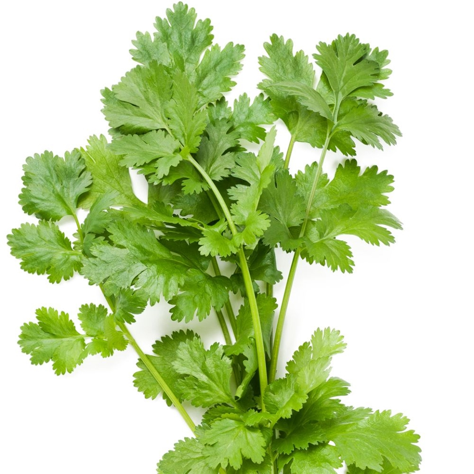 Cilantro! - Some either love cilantro or they don't, but I am one who loves it! Cilantro brings so much flavor to any dish. I keep cilantro handy for salsa, soups, and for my guacamole!