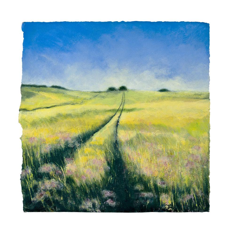 Rapeseed Field Lewes