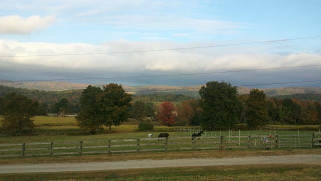 pastured horses