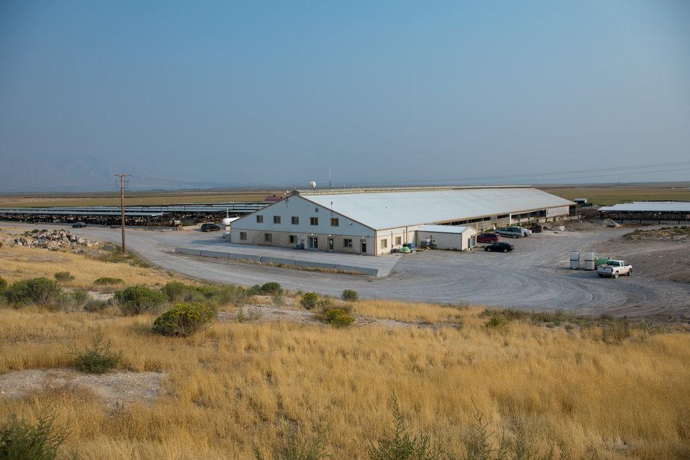 Bateman's Mosida Farms  0113.jpg