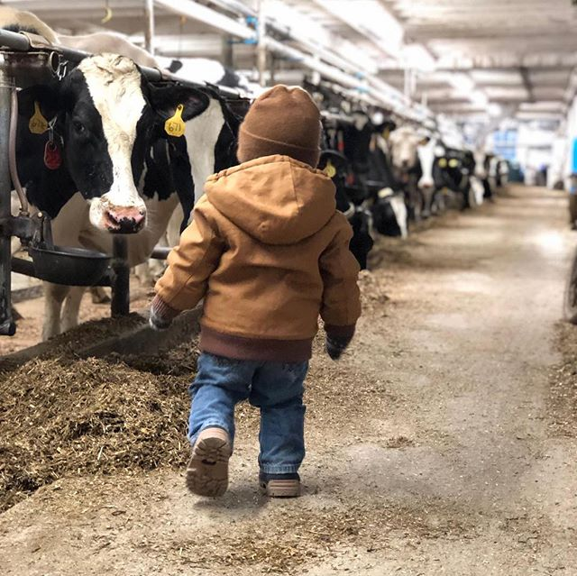 A passion for dairy and the care of their animals, is something DFA farmer-owner family of Hartwig Dairy Farm, share with their kids at a young age. 📸: @taylor_hartwig and @hartwigzac