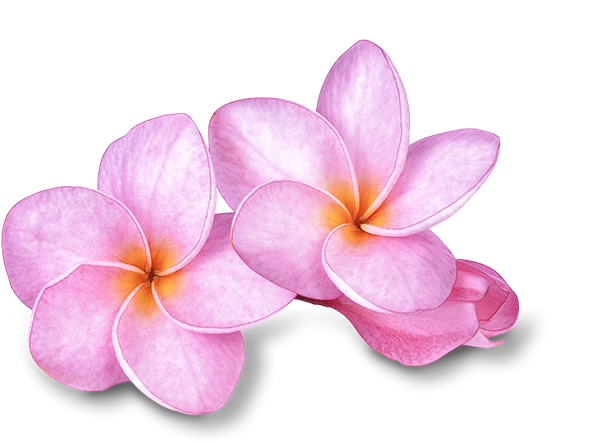 Maui_Flower1.png