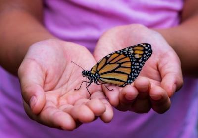 catching butterflies family matters.jpg