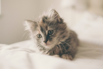 pet care expert.jpg