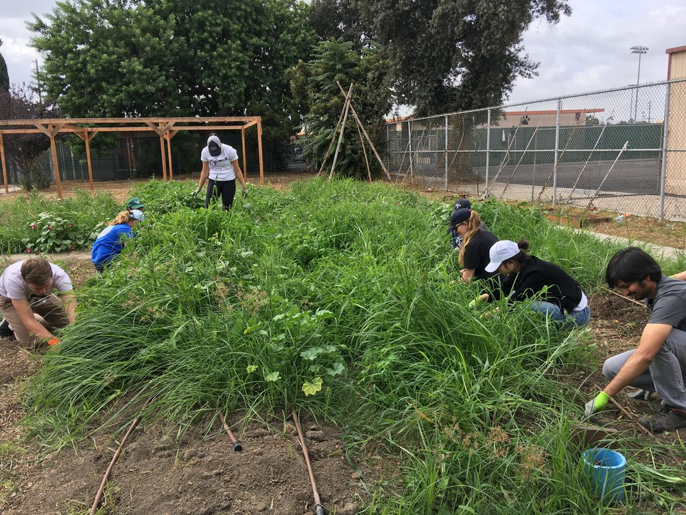 October 6, 2018: Field Lab Visit to Watts Community Healing Garden