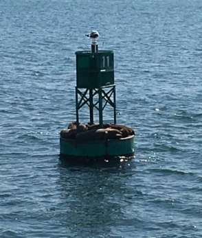 Sea lions resting on a buoy in the Port.