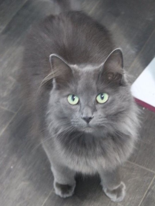 Pandora - Adoption Fee $504 Yr. Old Spayed FemaleI am just as gorgeous as my name.Come check me out in the Kat Kabana at CARE
