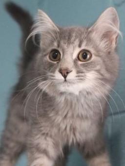 La La - Adoption Fee $504 Mo. Old Spayed Female