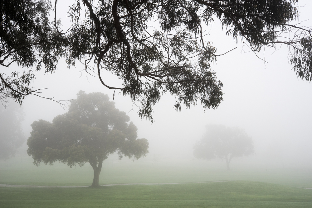 2trees and fog Landscape  Michal Greenboim.jpg
