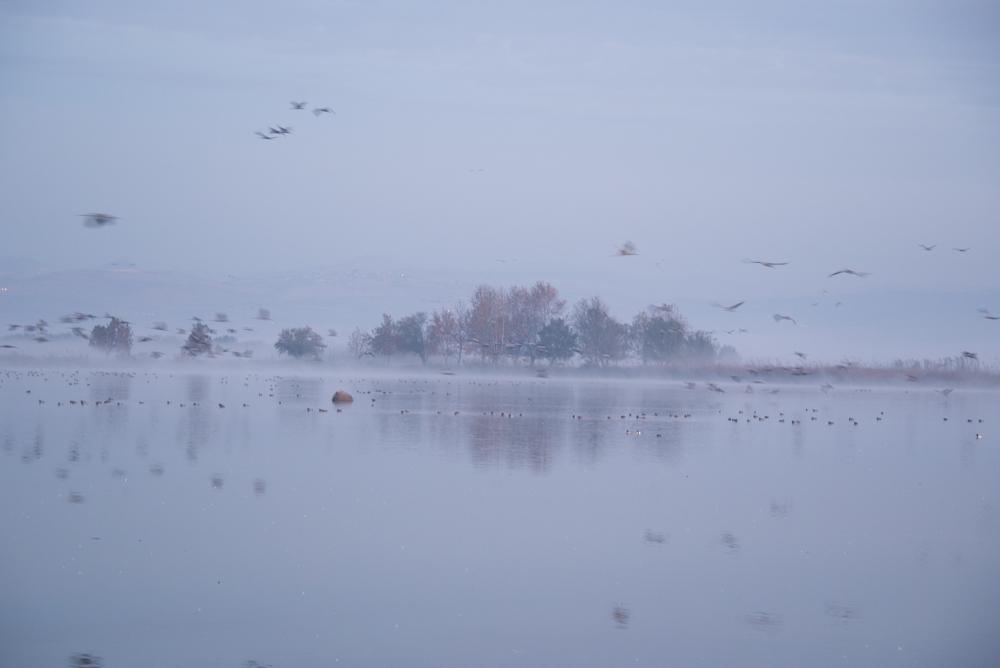 1Chula Lake Michal Greenboim.jpg