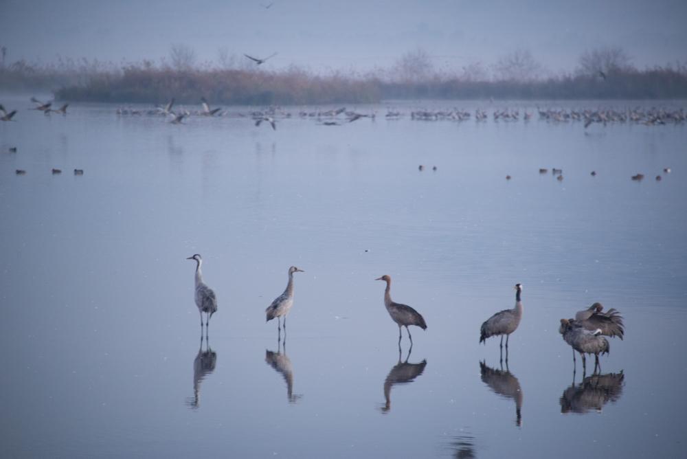 3Chula Lake Michal Greenboim.jpg