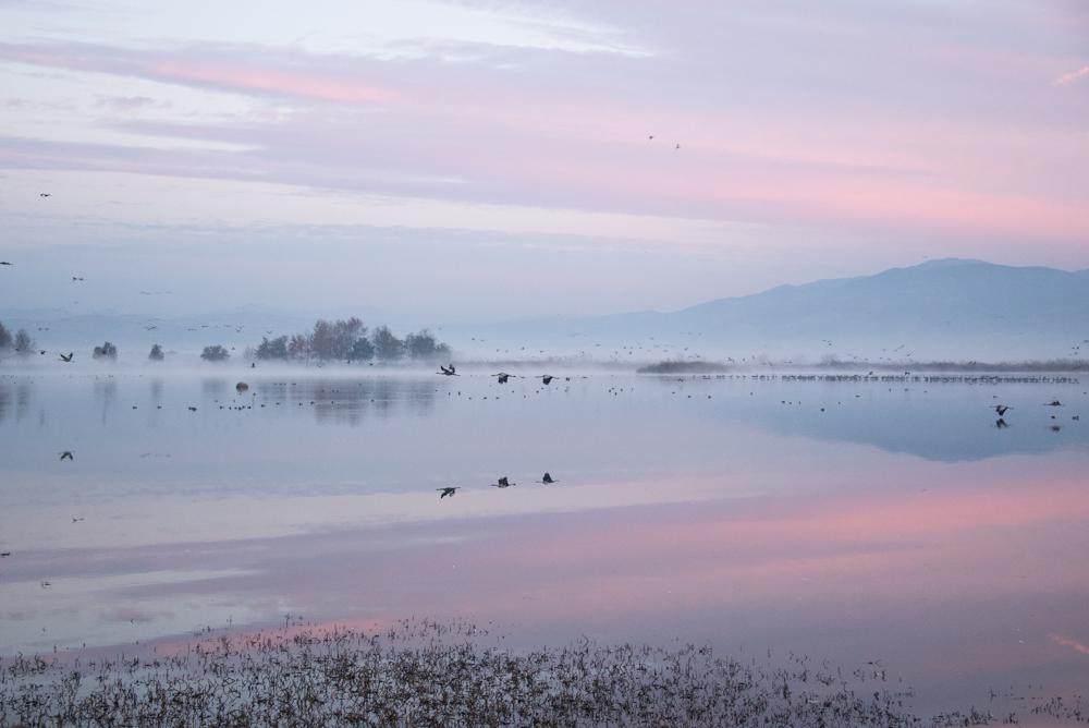 4Chula Lake Michal Greenboim.jpg