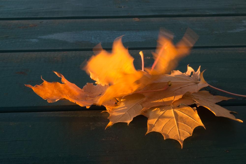 1  Autumn landscape.jpg