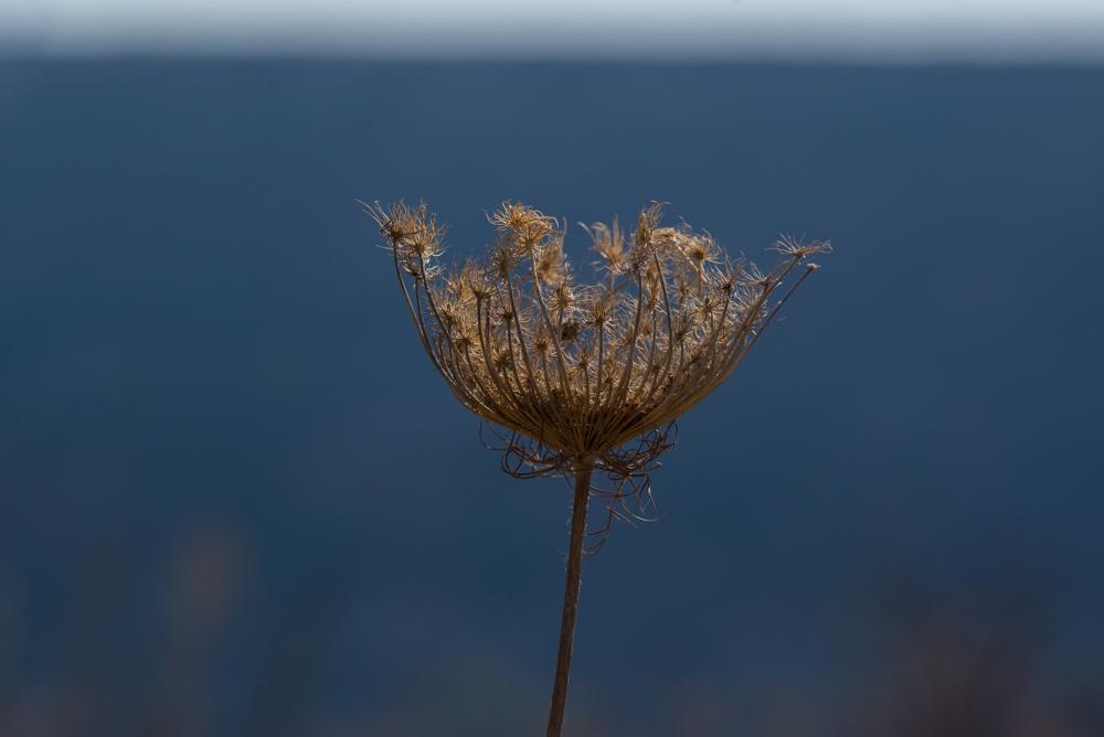 5  Autumn landscape.jpg
