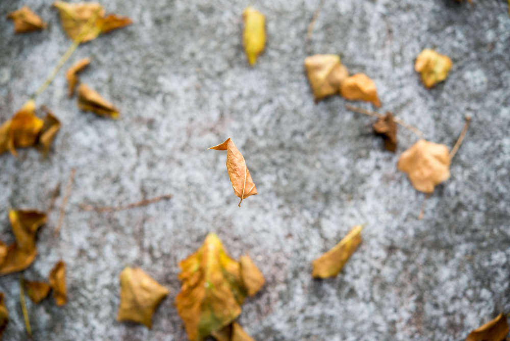 6  Autumn landscape.jpg