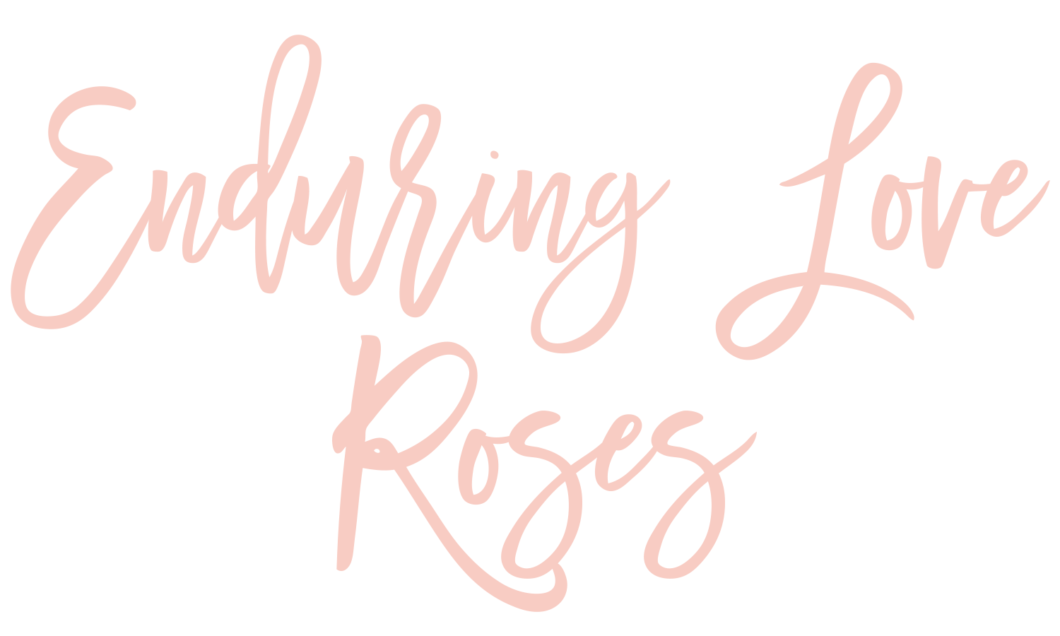 Enduring Love Roses