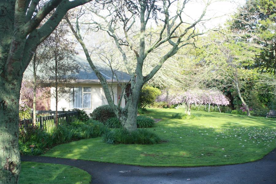 residential-blossom.JPG