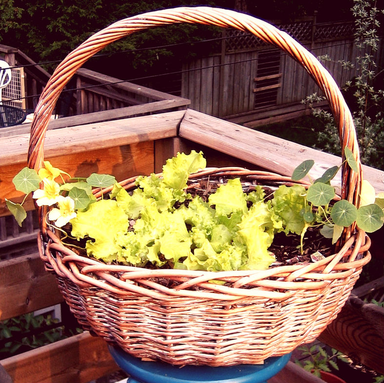 What would you grow if you had your own balcony basket to fill?