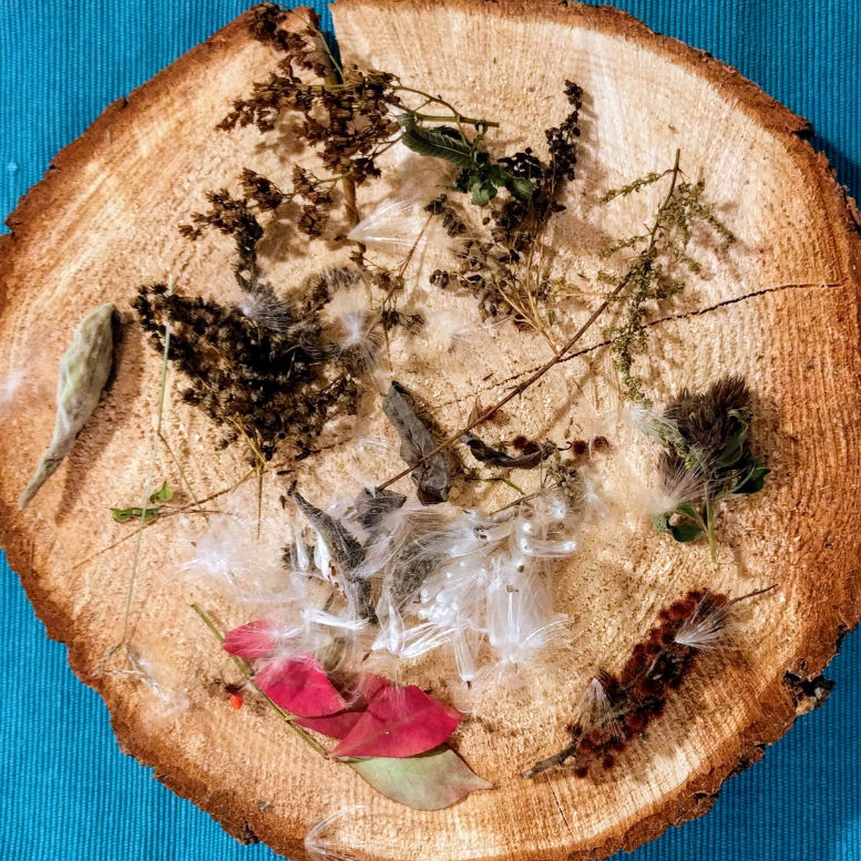 A smorgasbord of dried plant specimens led us to discovering autumn.