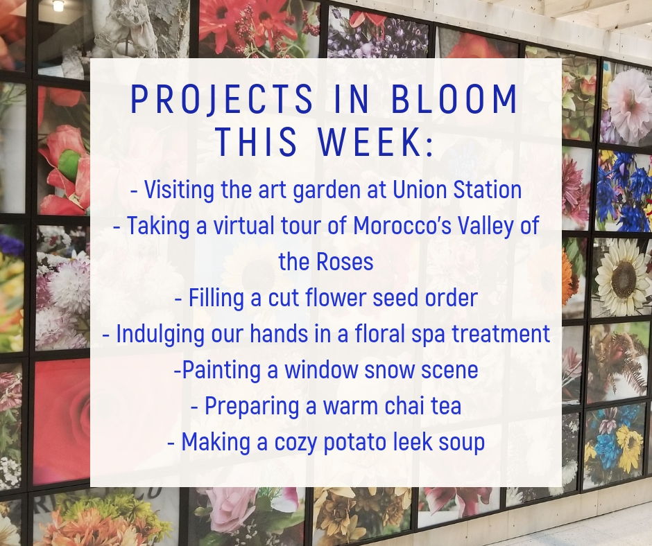 Projects In Bloom This Week:  visiting the art garden at Union Station, taking a virtual tour of Morocco's Valley of the Roses, filling a cut flower seed order, indulging our hands in a floral spa treatment, painting a window snow scene, preparing a warm chai tea, and making a cozy potato leek soup