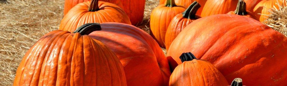 pumpkins-halloween-autumn-halloween-pumpkin-160662.jpeg