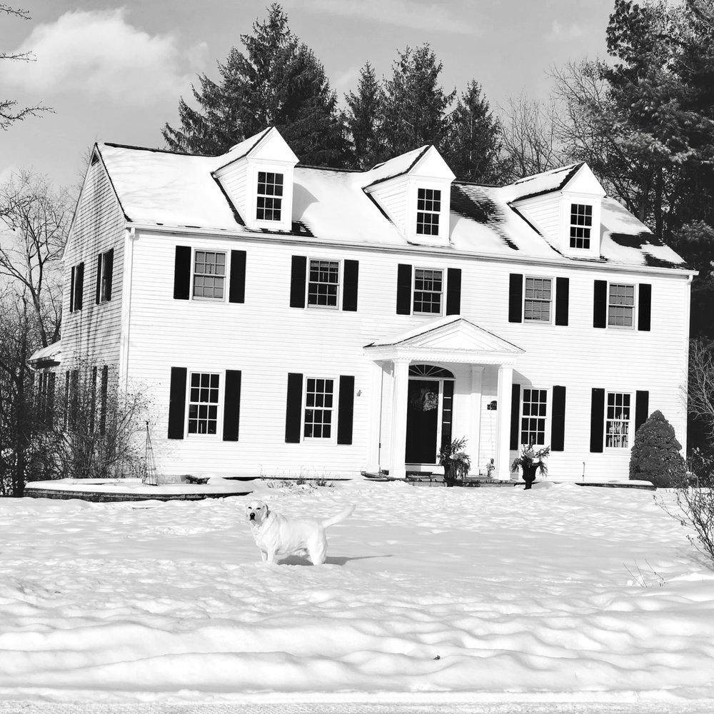 white_dog_white_house.jpg