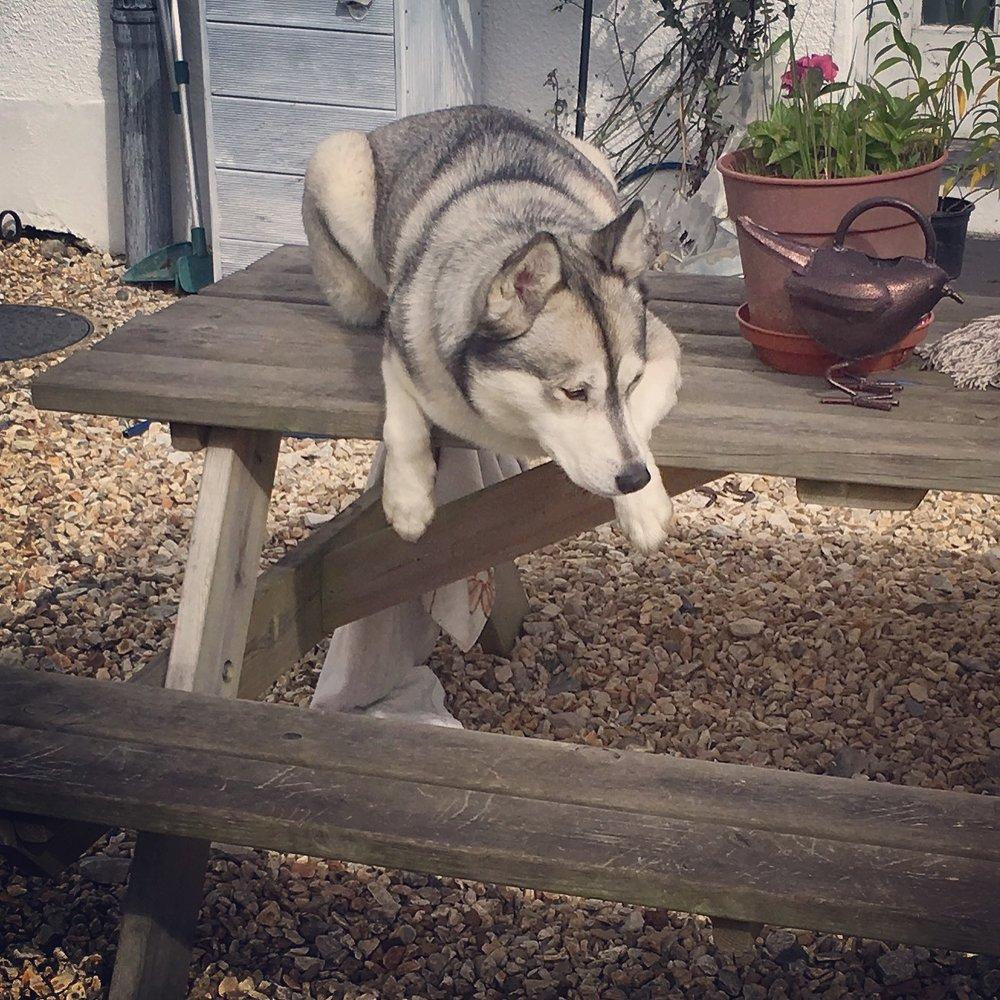 Hiya!  welcome to Lisa's dog grooming services - (Mobile Dog Grooming Unit)