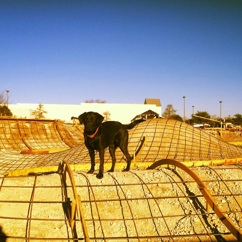 Joy the dog is ready to pour concrete!