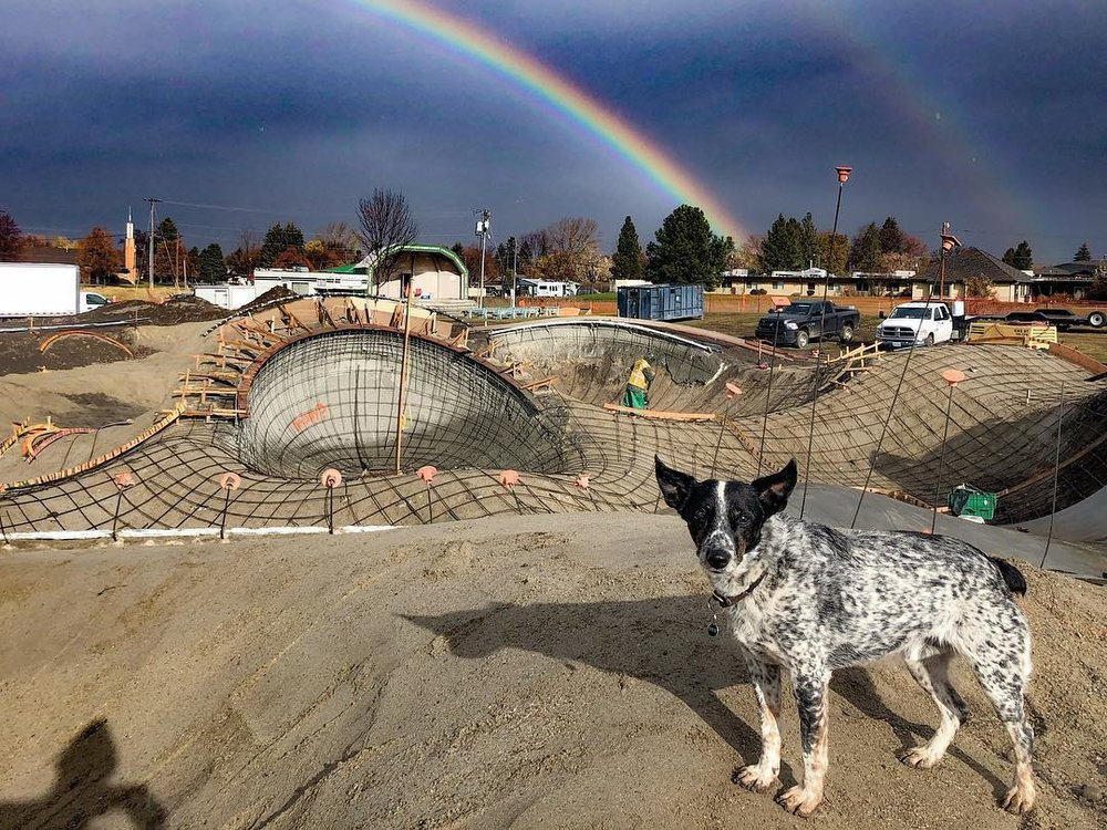 Noot the dog & the rainbow