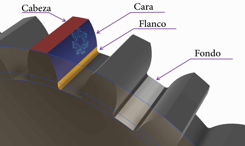 Parte del engrane - Cabeza, cara, flanco y fondo.