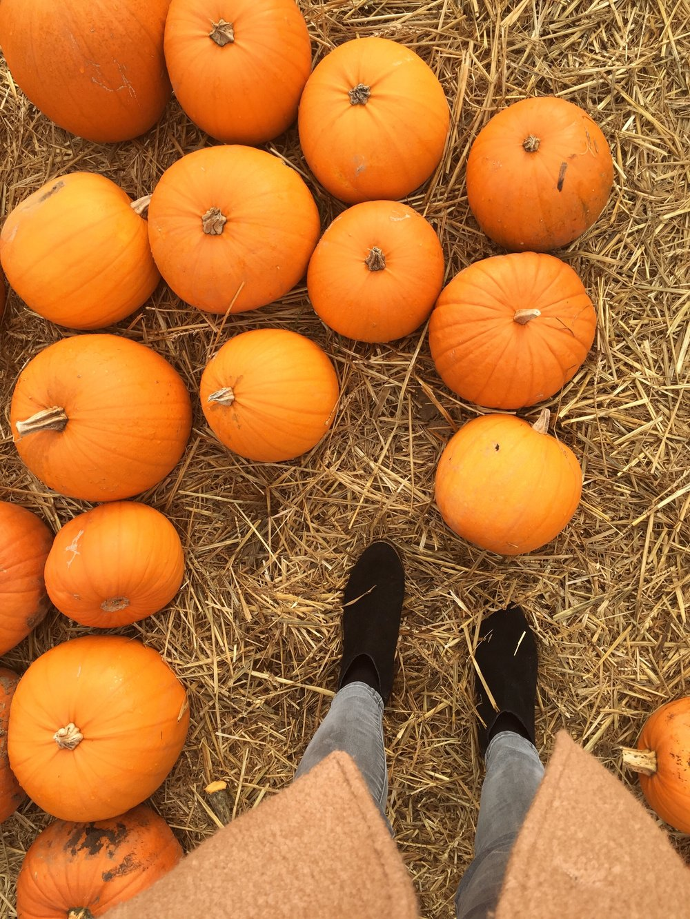 Cammas Hall Halloween Pumpkin Patch